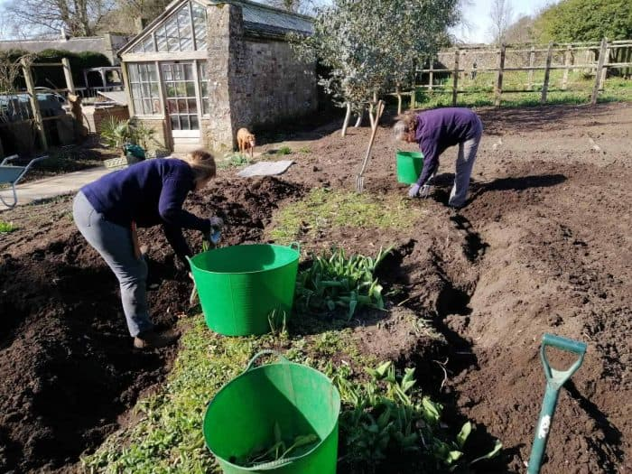 The garden team at Parham digging up the bindweed