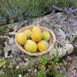 basket of melons grown at parham